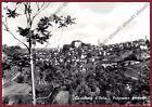 ALESSANDRIA CASTELLETTO D'ORBA 12 Cartolina FOTOGRAFICA viaggiata 1956