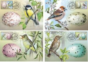 2020 Belarus. Bird eggs. Birds of Belarus. (4 cards)