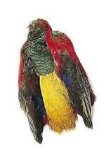 FLY TYING: GOLDEN PHEASANT FULL BODY SKIN **A1 QUALITY*