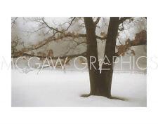 "WINSTON DAVID LORENZ - TRANQUILITY - ART PRINT POSTER 11"" X 14"" (984)"
