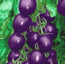 20 Seeds Purple Tomato Seed Pack Vegetable New For Home Garden 1 Bag /20 seeds