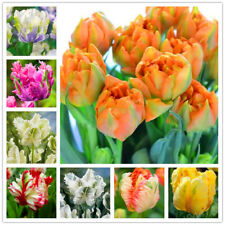 100pcs Tulip Seeds White Blue Purple Mixed Color Flower Seeds Bonsai Flower Seed