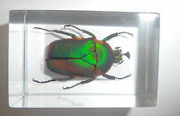 T-01 2 Pcs Vintage Yqtdmy Black Scorpion Spider Fashion Style Lucid Paperweight