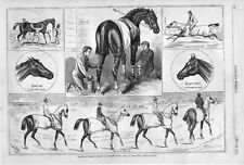 Training Thorough Breds at Jerome Park  -  by Henry Stull  - Horse Racing- 1879