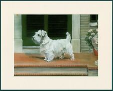 SEALYHAM TERRIER DOG GREAT DOG PRINT MOUNTED READY TO FRAME
