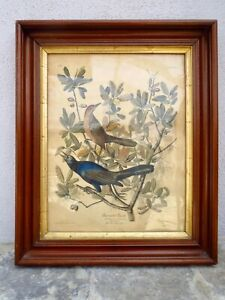 "Original 1937 J. J. AUDOBON FRAMED PRINT ""Boat Tailed Grackle"" 23"" by 18.5""Frame"