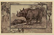 The Rhinoceros Postcard