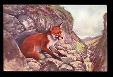 Animals Fox Tuck Oilette #3211 artist Scott Rankin PPC 1920