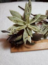 Various Artificial Succulent Flower Picks, 3-Piece