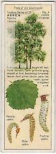 Quaking Aspen Tree Populus trumula 1930s Trade Ad Card