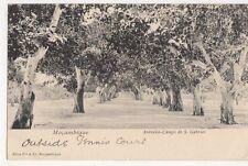 Mocambique, Avenida-Campo de S. Gabriel 1907 Postcard, B323