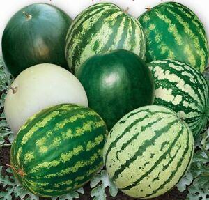 Seeds Watermelon 33 Heroes Mix Rare Fruits Planting Organic Heirloom Ukraine