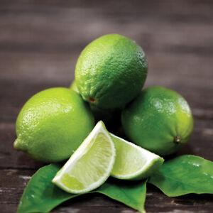 Lime Fruit Half-Hardy Garden Citrus Tree Evergreen Plant 1 x 9cm Pot T&M
