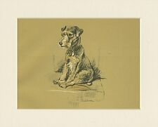 LAKELAND TERRIER CHARMING 1930'S DOG ART PRINT by MAC LUCY DAWSON READY MOUNTED