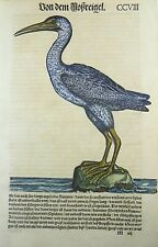Conrad Gesner; BLUE CRANE hand coloured woodcut FOLIO FIRST EDITION 1557