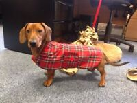 Dachshund Dog Coat MINIATURE (made To Measure) Please Read Item Description .