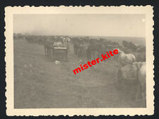 16. chars division-Chars-Grenadier-butin carrosses/CHEVAUX-voiture-stalingrad - 22