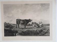 RACE NORMANDE Vaches LITHOGRAPHIE Didier ROSA BONHEUR Goupil Sartorius XIX°