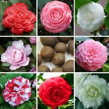 100pcs Mix Camellia Beautiful Flower Seeds