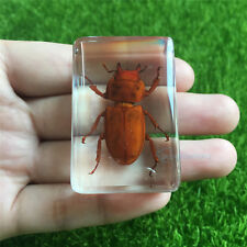 Special Red Insects Specimen-Lucanidae-Resin Paperweight Crafts Block 45x30 mm