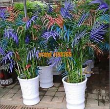 50 Palm Bamboo Seeds Indoor plants Home Garden Tree seeds ship 25-45day
