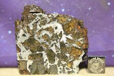 Admire Pallasite Meteorite from Kansas USA 45 gram part slice