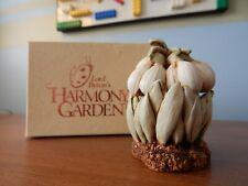 Harmony Garden's Snow Drops