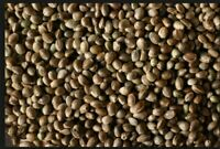 HEMP SEED -WHOLESALE PRICES - For sprouting or growing. Healthy Omega 3's