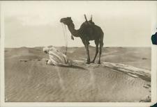 Tunisie, Arabe faisant sa prière  Vintage silver print. Vintage Tunisia.   T