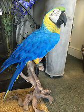 More details for large south american parrot in vivid blue & yellow parrot life size sculpture !!