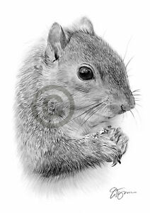 GREY SQUIRREL Pencil Drawing Print A4 only signed by artist Gary Tymon