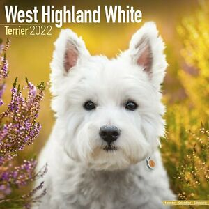 West Highland Terrier Westie Calendar 2022 Dog Breed Wall Calendar 15% OFF BUY!