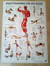 NEU Anatomie / Physiotherapie Lehrposter Krafttraining für die Beine /Kraftsport