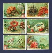 LIEBIG - RARE SET OF 6 CARDS  -  S  926  /  F  925  -  SEA  CREATURES  -  1908