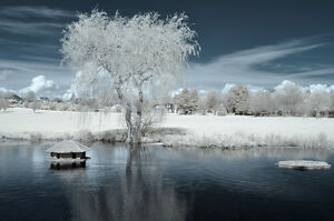 Nikon D90 Infrared converted 720nm Digital IR infrared Camera.Standard infrared.