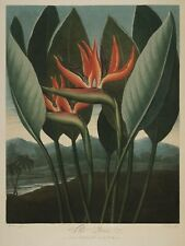 """Temple of Flora : """"The Queen"""" (1807) — Giclee Fine Art Print"""
