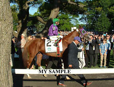 RARE CALIFORNIA CHROME 8 by 10 PHOTO 2014  BELMONT STAKES HORSE RACING