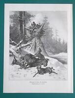 WOLF HUNT in Slovenia - 1892 Victorian Era Print