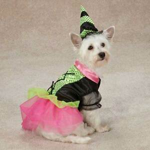 Witchy Business Dog Costume