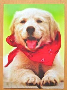 "THANK YOU CARD ""Thanks!"" Avanti GOLDEN RETRIEVER Puppy Dog"
