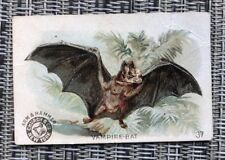 VAMPIRE BAT VINTAGE Trade Card Arm & Hammer Church & Co Interesting Animals 37