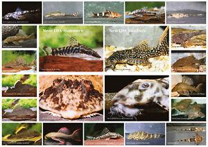 AQUALOG - Fold Poster NEW LDA-Numbers - Catfish, Loricariidae