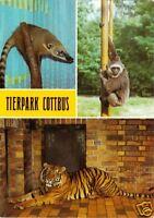 AK, Cottbus, Tierpark Cottbus, drei Abb., Version 3, 1986