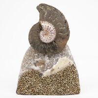 Natural Split Ammonite Fossil Fossilised Iridescent Dinosaur era, Volga River
