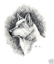 Canaan Dog Pencil Drawing Art 11 X 14 Print Signed Djr