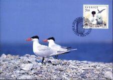Caspian Tern Sterna Caspia Sea Bird Sweden Mint WWF Maxi FDC Card 1994