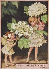 Flower Fairies: The Guelder Rose Fairy Vintage Print c1930 by Cicely Mary Barker