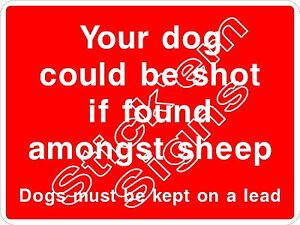 Your dog could be shot if found amongst sheep - Dogs on lead COUN0068 signs