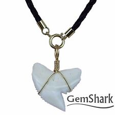 GemShark Real Tiger Shark Tooth Necklace Choker Pendant 14 K gold plating Chain