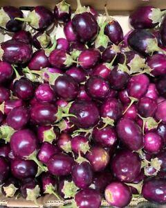 Baby Eggplant Purple Round Thai / Indian Heirloom 30+  seeds 100% Organic USA